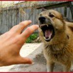 Случается, что верные животные оказываются помощниками нарушителей закона.
