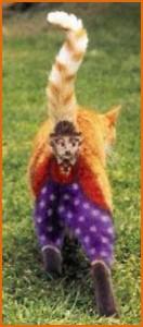 Экстравагантное увлечение американцев: раскрашивание кошек во все цвета радуги. Фото. Видео