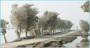 Интересное явление в природе – деревья в паутине.