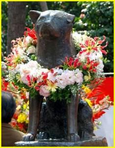 Пёс Хатико – японский символ любви и преданности. Фото