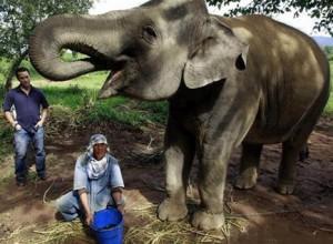Навоз слона используется для производства самого дорогого в мире кофе.