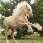 Самые большие лошади. Видео