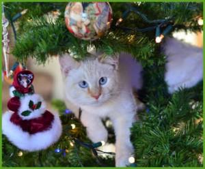 Опасность новогодней ёлки для домашней кошки.