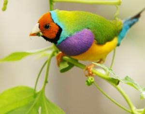 Красота природы. Яркие птицы.