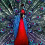 Яркие краски природы. Красивые птицы. Фото.