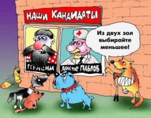 Анекдоты о собаках в Год собаки