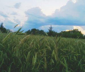 День исчезнувшей, но не забытой деревни Малый Ирым, Удмуртия